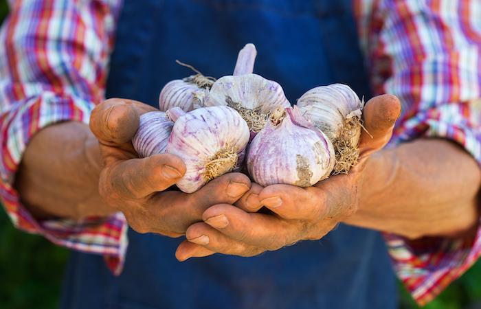hands holding raw garlic cloves that make up a niche market